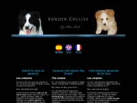 bordercollies.es